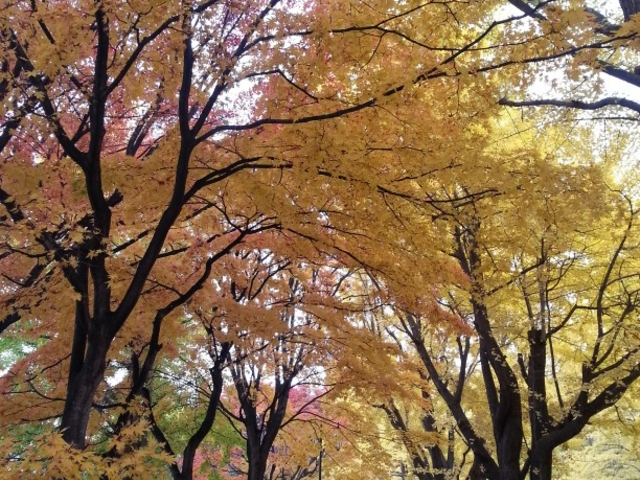 北大_北海道大学