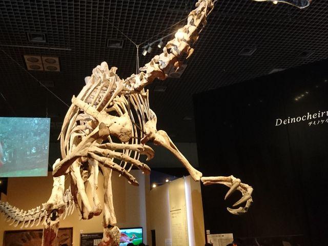 デイノケイルス_国立科学博物館