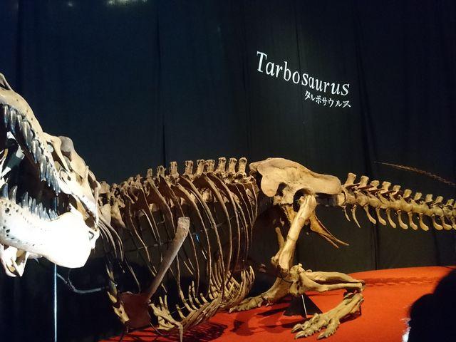 タルボサウルス_国立科学博物館