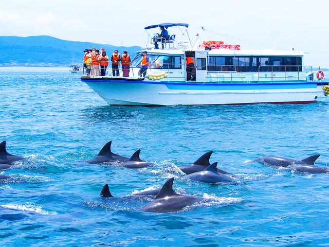 観光船で安心安全なクルーズ_南島原イルカウオッチング
