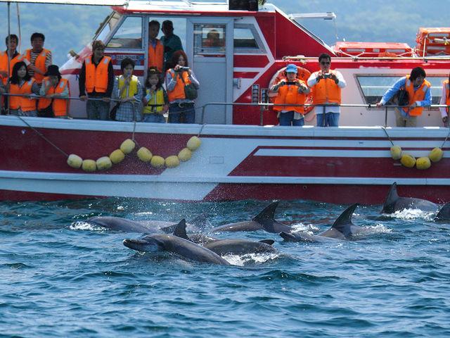 イルカたちは船慣れているので近くに寄ってきてくれます。_南島原イルカウオッチング