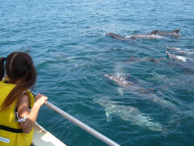 たくさんのイルカたちに大興奮!_南島原イルカウオッチング
