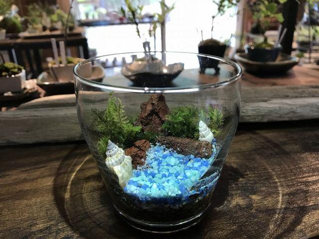 苔テラリウム_小さな緑のインテリア 苔屋