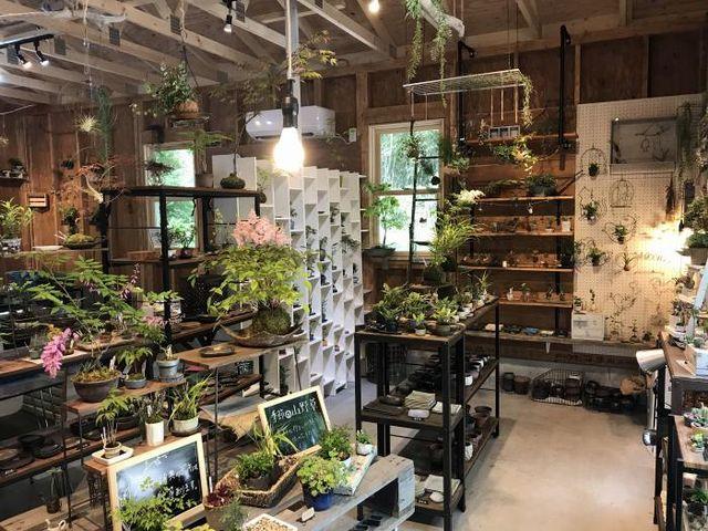 店内_小さな緑のインテリア 苔屋
