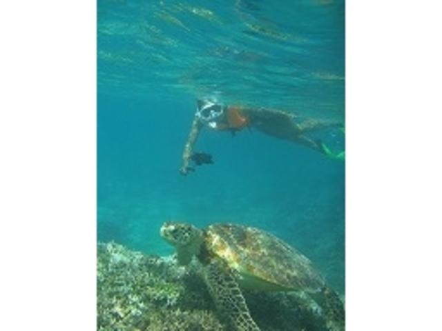 サンゴとヤドカリ