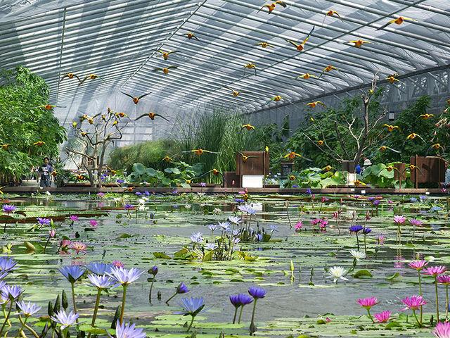 熱帯性のスイレンが1年中楽しめます_掛川花鳥園