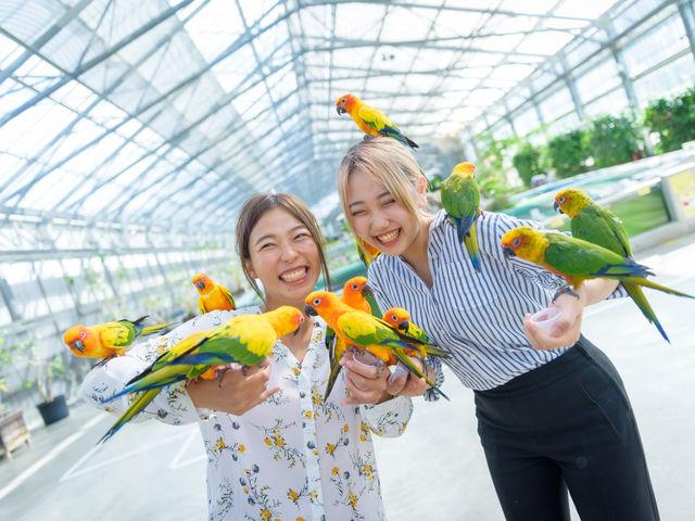 カラフルな鳥たちとのふれあいが楽しい!_掛川花鳥園