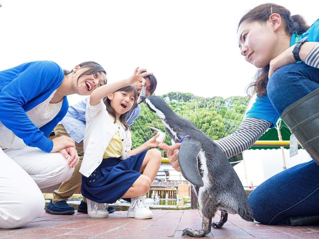 ペンギンにごはんをあげてみよう_掛川花鳥園