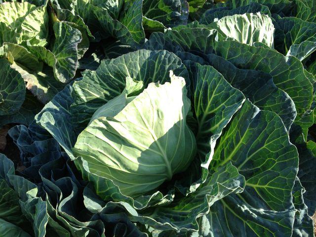 野菜収穫体験_お陽様農園