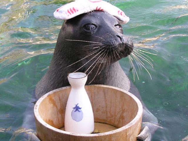 ここでしか見れないバイカルアザラシショー_箱根園水族館