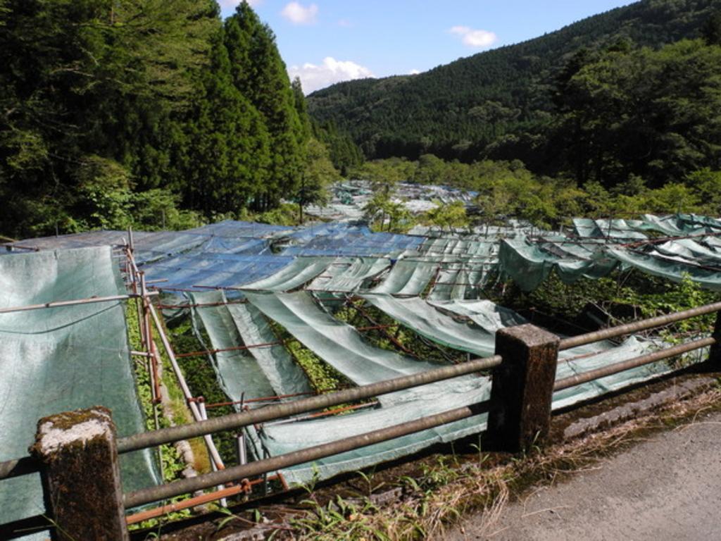 地蔵堂(静岡県)のその他名所ランキングTOP2 - じゃらんnet
