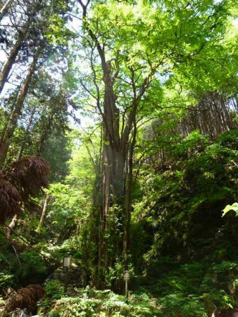 石裂山の千本桂