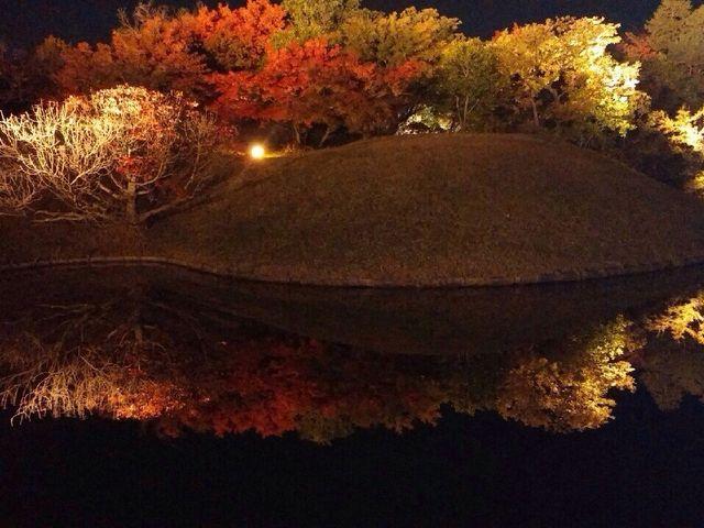 夜のライトアップに行ってきました! 紅葉が水面に映り、鏡のような素晴らしい景色でした!一度は行く価_梅小路公園