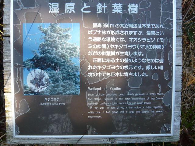 遊歩道途中にいろんな説明がありました。_八幡平大沼遊歩道