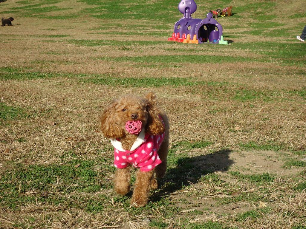 【全国ドッグラン情報・43選】愛犬と一緒にお出かけ♪ワンコと遊べるレジャー施設も!
