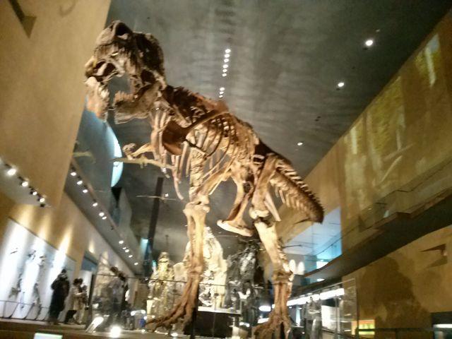 間近で見れます_北九州市立いのちのたび博物館