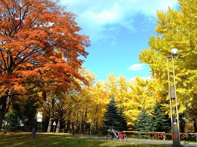 紅葉と黄葉_中島公園
