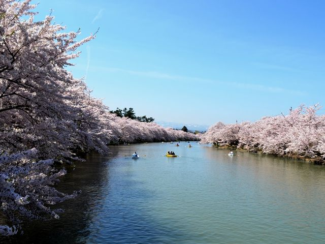 桜のトンネルと西濠_弘前公園