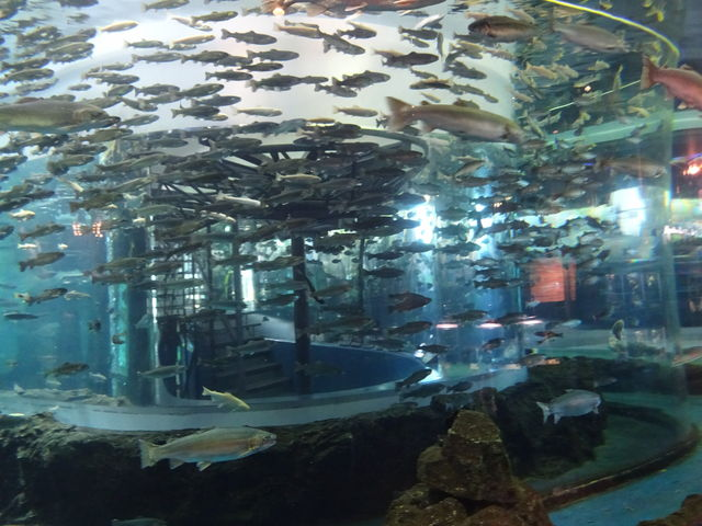 綺麗な水族館という印象です_山梨県立富士湧水の里水族館(森の水族館)