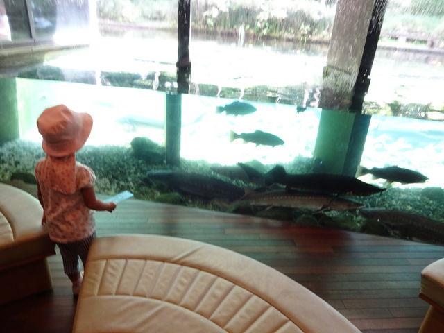娘が生き生きと見てました。_山梨県立富士湧水の里水族館(森の水族館)