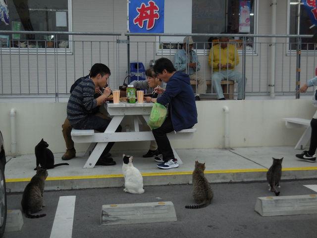 食事中の家族に群がるネコども_奥武島