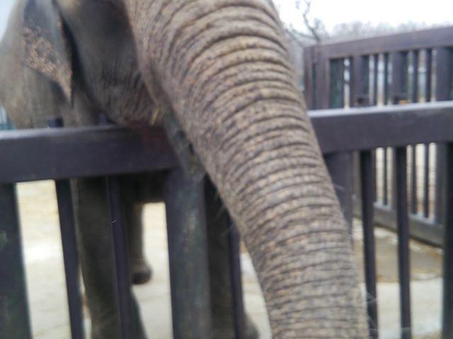 象に触れます!とても人懐っこいです(冬季限定)_那須サファリパーク