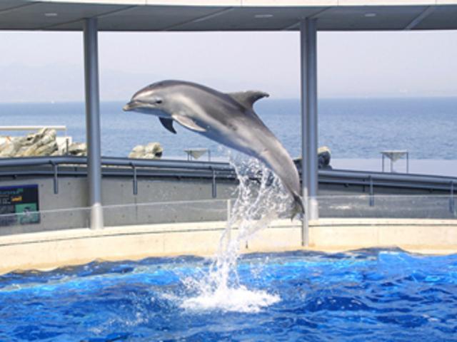 イルカの芸_大分マリーンパレス水族館「うみたまご」