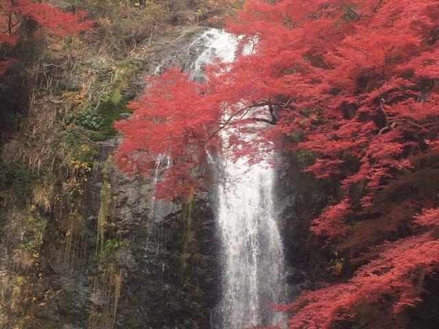 紅葉の滝_明治の森箕面国定公園(箕面の滝)
