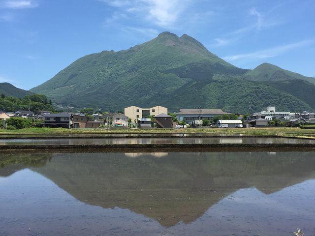 田植え真っ最中だったこの日。水が張られた田んぼにうつる由布岳。_由布院温泉