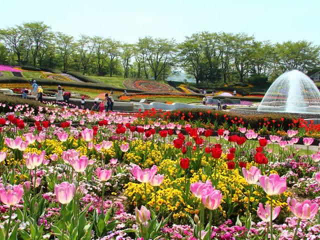 国営みちのく杜の湖畔公園に彩るお花_国営みちのく杜の湖畔公園
