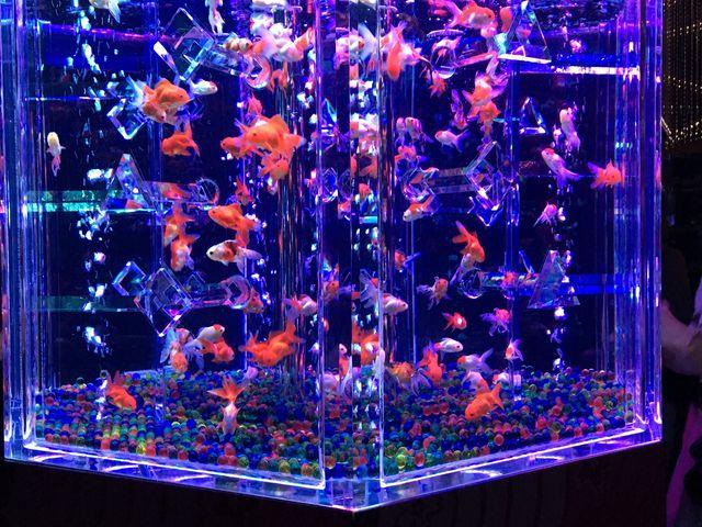 金魚だけの大きな水槽_堂島リバーフォーラム