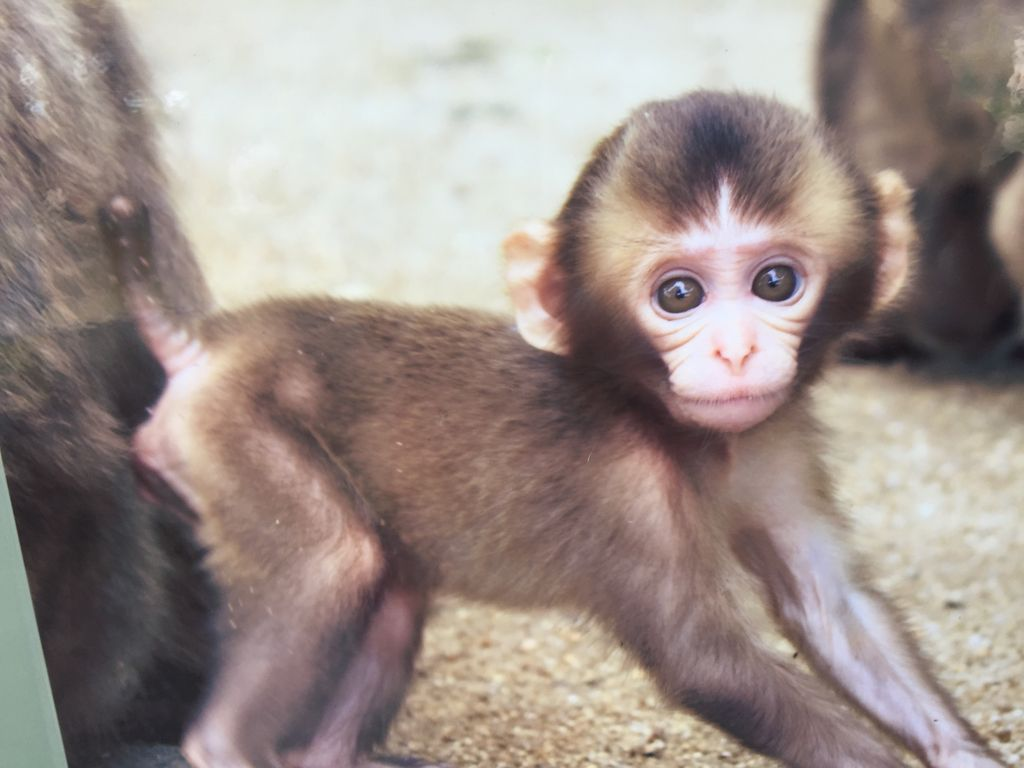 高崎山自然動物園