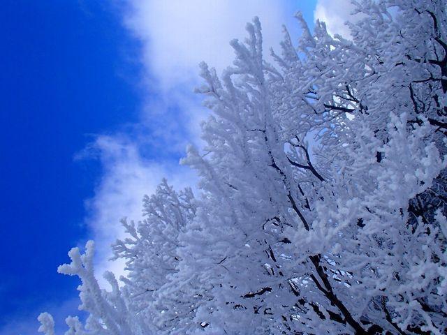 感動の樹氷_御在所岳