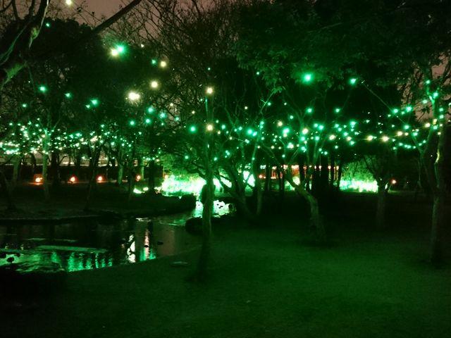 京都冬の光宴2017のライトアップです。_梅小路公園