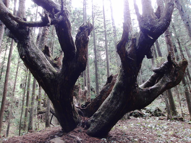 すごい迫力です_21世紀の森公園