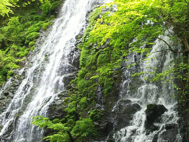 新緑の龍双ヶ滝_龍双ケ滝