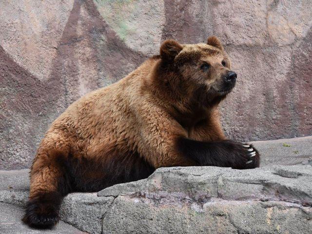 浜松市動物園_浜松市動物園