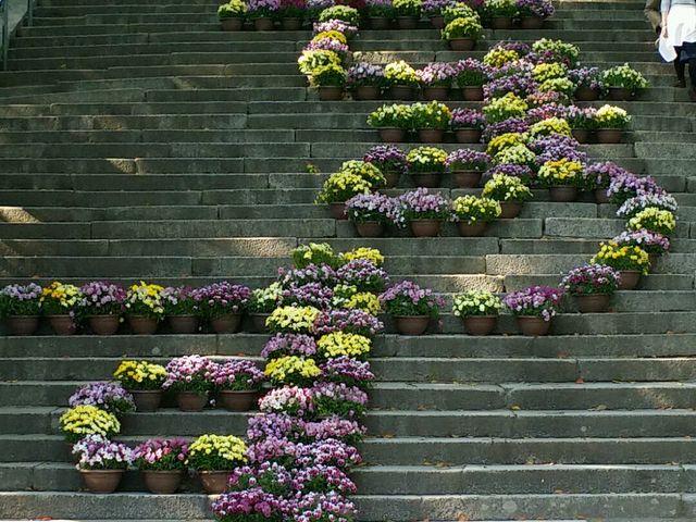 階段のお花が綺麗でした。 山口の方言だそうです。 スグ近くにお土産屋さんもたくさんありました。_防府天満宮