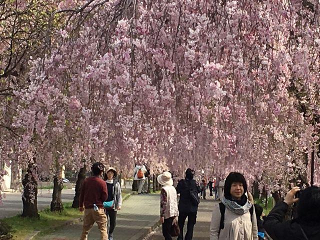 日中線しだれ桜並木