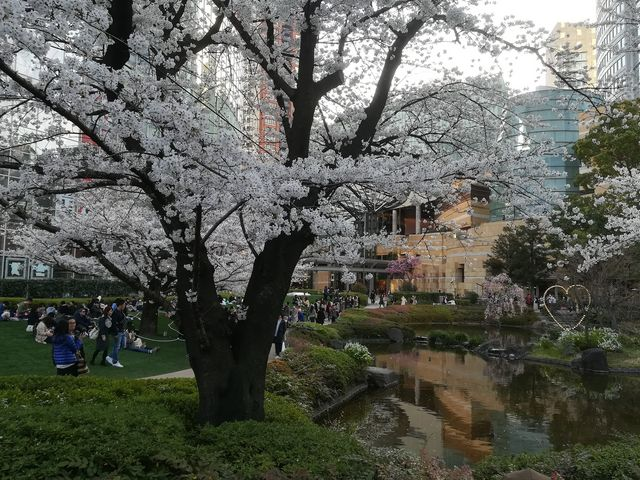 毛利庭園の桜_六本木