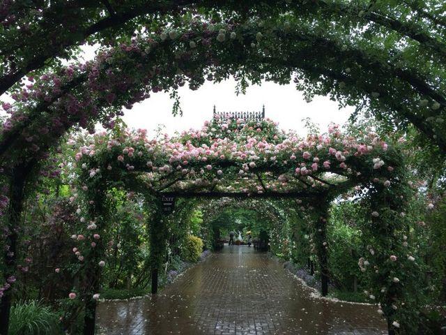 バラのトンネルです。_横浜イングリッシュガーデン