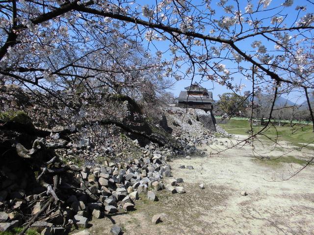 桜と崩れた石垣に戌亥櫓_熊本城の桜