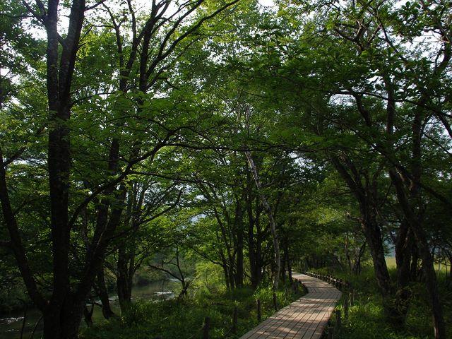 気持ちのいい林間の道。_戦場ヶ原