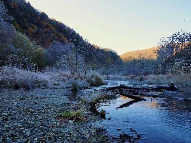 大正池に注ぐ川 霜が降りて_大正池