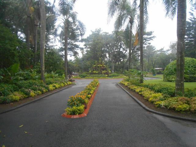 亜熱帯ジャングル_青島の亜熱帯性植物群落