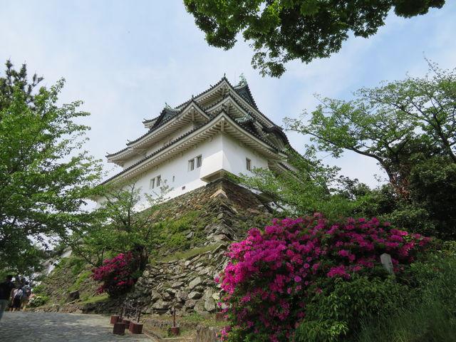 復興された天守_和歌山城
