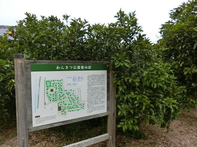 案内図_かんきつ公園/夏みかんの花