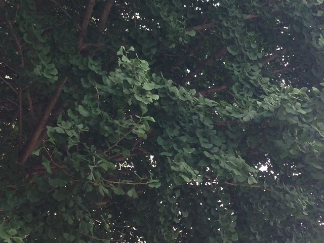緑が多い_ピッキオ