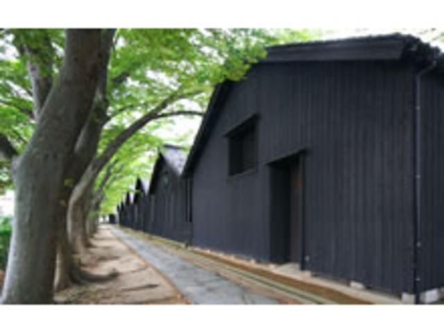ケヤキ並木は風避けと日陰の為に植えられたとか_山居倉庫