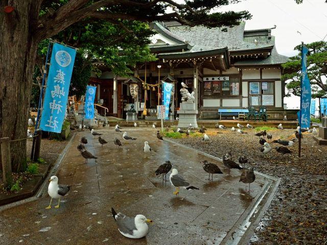 境内で巣作り_蕪嶋神社